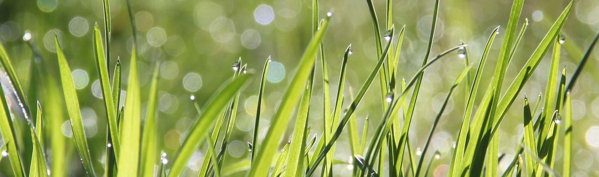 Wiese in der Natu:Gen Y & Z für Bio begeistern