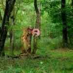 Schöne Wälder mit nicht immer verständlicher Beschilderung