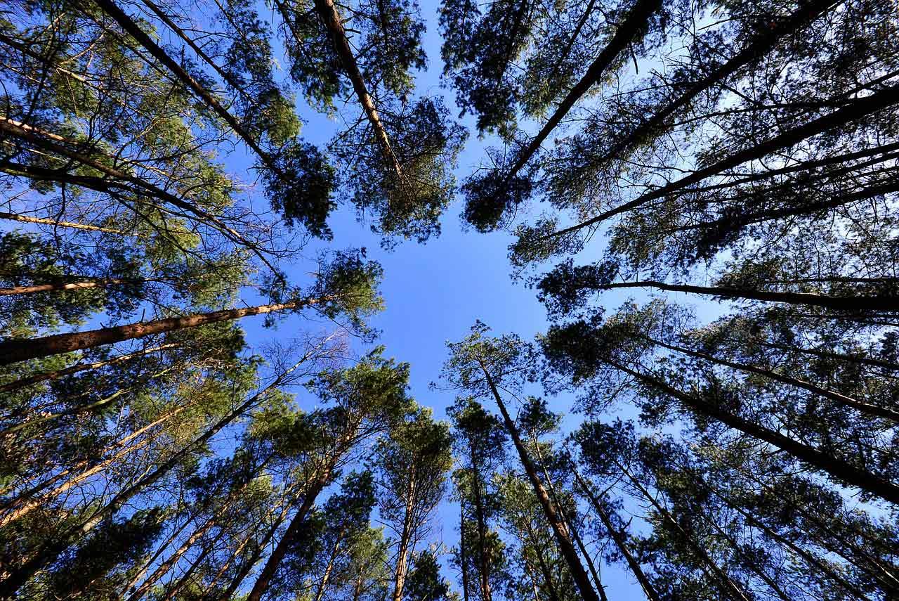 Abbildung Baumkronen von unten Richtung Himmel: Konsequenz - Vorsaetze 2019